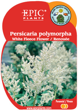 Epic plant company perennials water plants clematis herbs persicaria polymorpha mightylinksfo